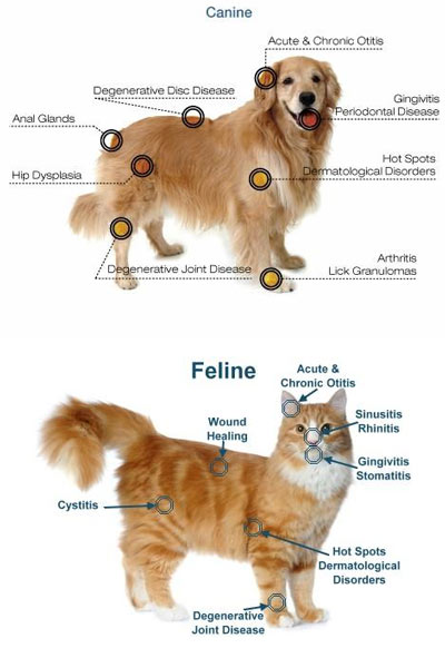 laser-therapy-benefits-dogs-cats
