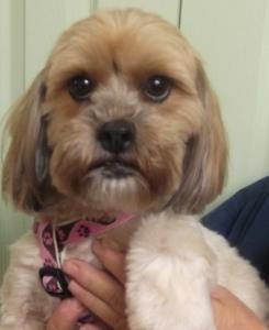 Sophie   3yr   Terrier