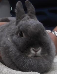 Thumper | 3y | Dwarf Rabbit